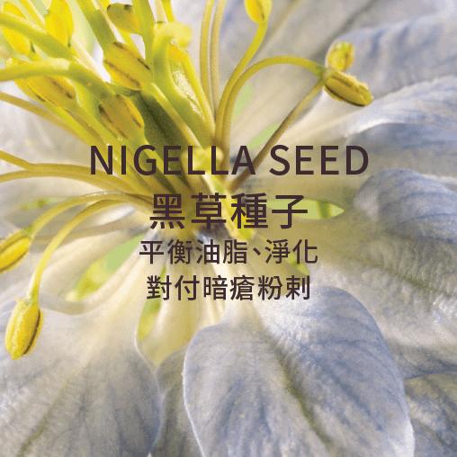 nigella seed 黑草種子 平衡油脂 净化 對付暗瘡粉刺