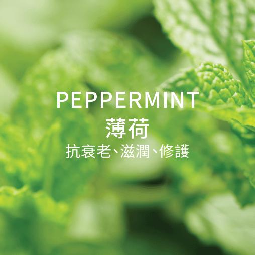 peppermint 薄荷 抗衰老 滋潤 修護