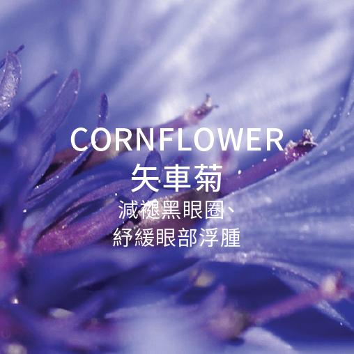 cornflower 矢車菊 減退黑眼圈 舒緩眼部浮腫