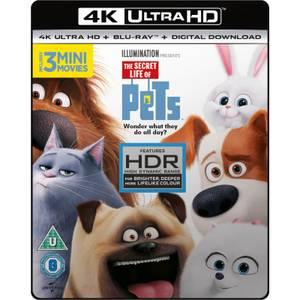 The Secret Life Of Pets - 4K Ultra HD
