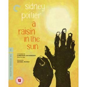 Un raisin au soleil - The Criterion Collection