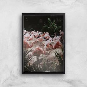 A Pat Of Flamingos Giclee Art Print