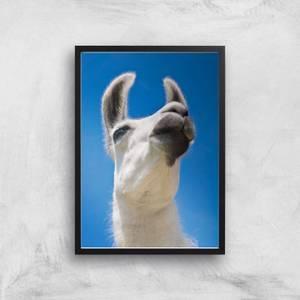 Llama Giclee Art Print