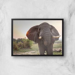Curious Elephant Giclee Art Print
