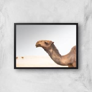 Camel Giclee Art Print