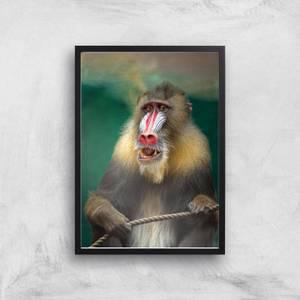 The Wise Baboon Giclee Art Print