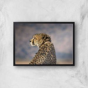 Cheetah Giclee Art Print