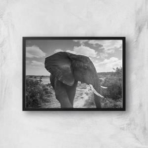 Majestic Elephant Giclee Art Print