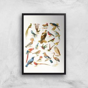 Researching Birds Giclee Art Print