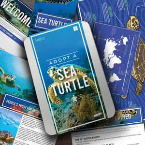 Adopt a Sea Turtle Gift Tin