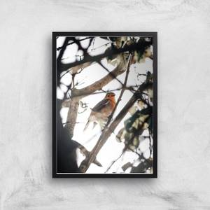 Winter Robin Giclee Art Print