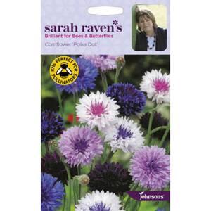 Sarah Ravens Cornflower Polka Dot Seeds