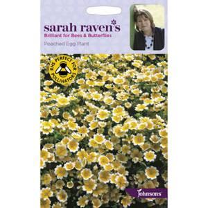 Sarah Ravens Poached Egg Plant Seeds