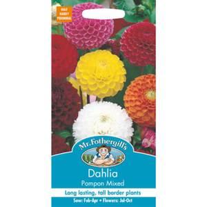Mr. Fothergill's Dahlia Pompon Mixed (Dahlia X Hortensis) Seeds