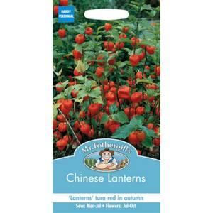 Mr. Fothergill's Chinese Lanterns (Physalis Alkekengi) Seeds