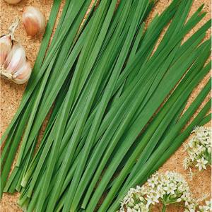 Garlic Chives 1L