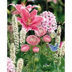 Butterfly Garden Collection Spring Bulbs