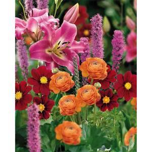 Polinator Collection Spring Bulbs