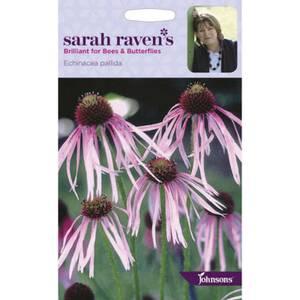 Sarah Ravens Echinacea Pallida Seeds