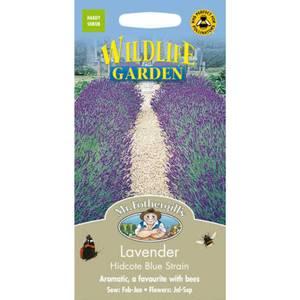 Lavender Hidcote Blue Strain (Lavandula Angustifolia) Seeds