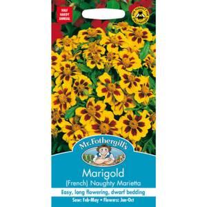 Mr. Fothergill's Marigold (French) Naughty Marietta Seeds
