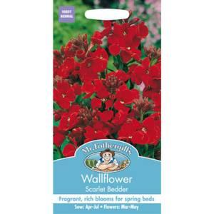 Mr. Fothergill's Wallflower Scarlet Bedder Seeds