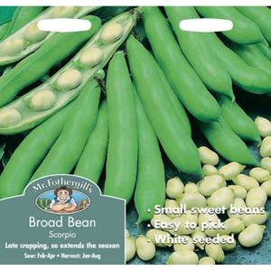 Broad Bean Scorpio Vegetable Seeds
