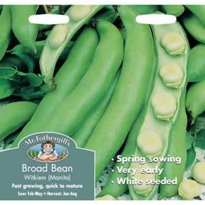 Mr. Fothergill's Broad Bean Witkiem Manita Seeds