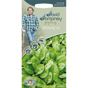 DD Spinach Seeds