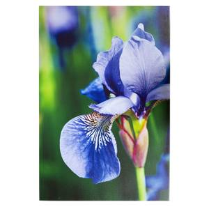 Purple Iris Outdoor Canvas 90x59cm