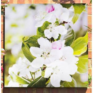 Apple Blossom Outdoor Canvas 79x79cm