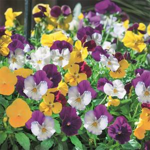 Bedding Mix Spring Trailing 6 Pack