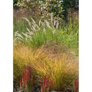 Grass Mix 19 cm