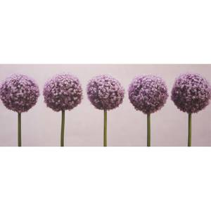 Row Of Alliums Canvas