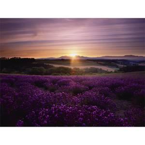 Lavander Sunset Canvas