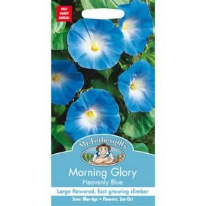 Mr. Fothergill's Morning Glory Heavenly Blue (Ipomoea Purpurea) Seeds