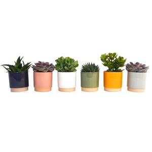 Succulent in Eno Duo Pot - 13cm