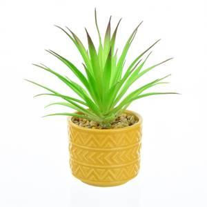 Spiky Succulent in Ochre Pot