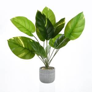 Leafy Plant in Grey Pot