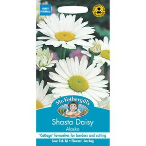 Shasta Daisy Alaska (Leucanthemum X Superbum) Seeds