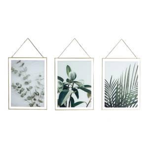 Hanging Leaf Prints on Glass Set of 3