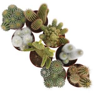 Cactusmix 12cm
