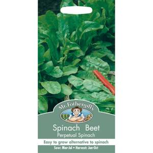 Mr. Fothergill's Spinach Beet Perpetual Spinach (Beta Vulgaris) Seeds