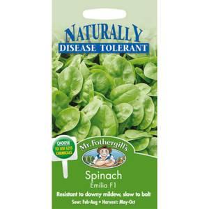 Mr. Fothergill's Spinach Emilia F1 (Spinacia Oleracea) Seeds
