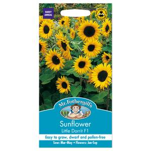 Mr. Fothergill's Sunflower Little Dorrit F1 Seeds