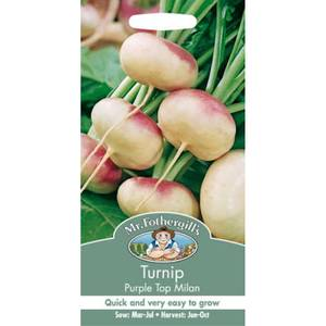 Mr. Fothergill's Turnip Purple Top Milan (Brassica Rapa Rapifera) Seeds