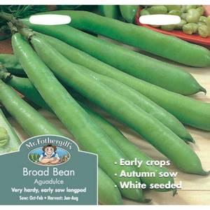 Mr. Fothergill's Broad Bean Aquadulce (Vicia Faba) Seeds