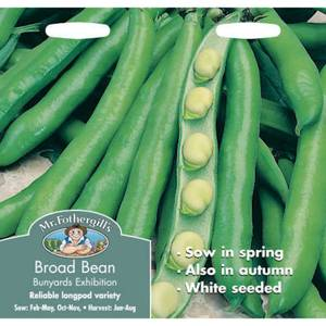 Broad Bean Bunyards Exhibition (Vicia Faba) Seeds