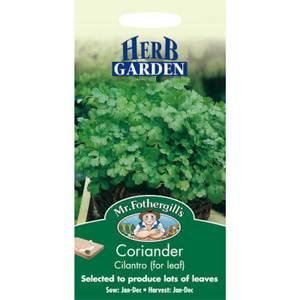 Coriander Cilantro (Coriandrum Sativum) Seeds
