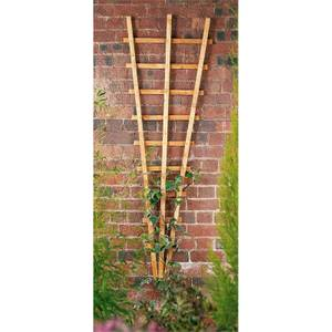 Forest Garden Fan Trellis